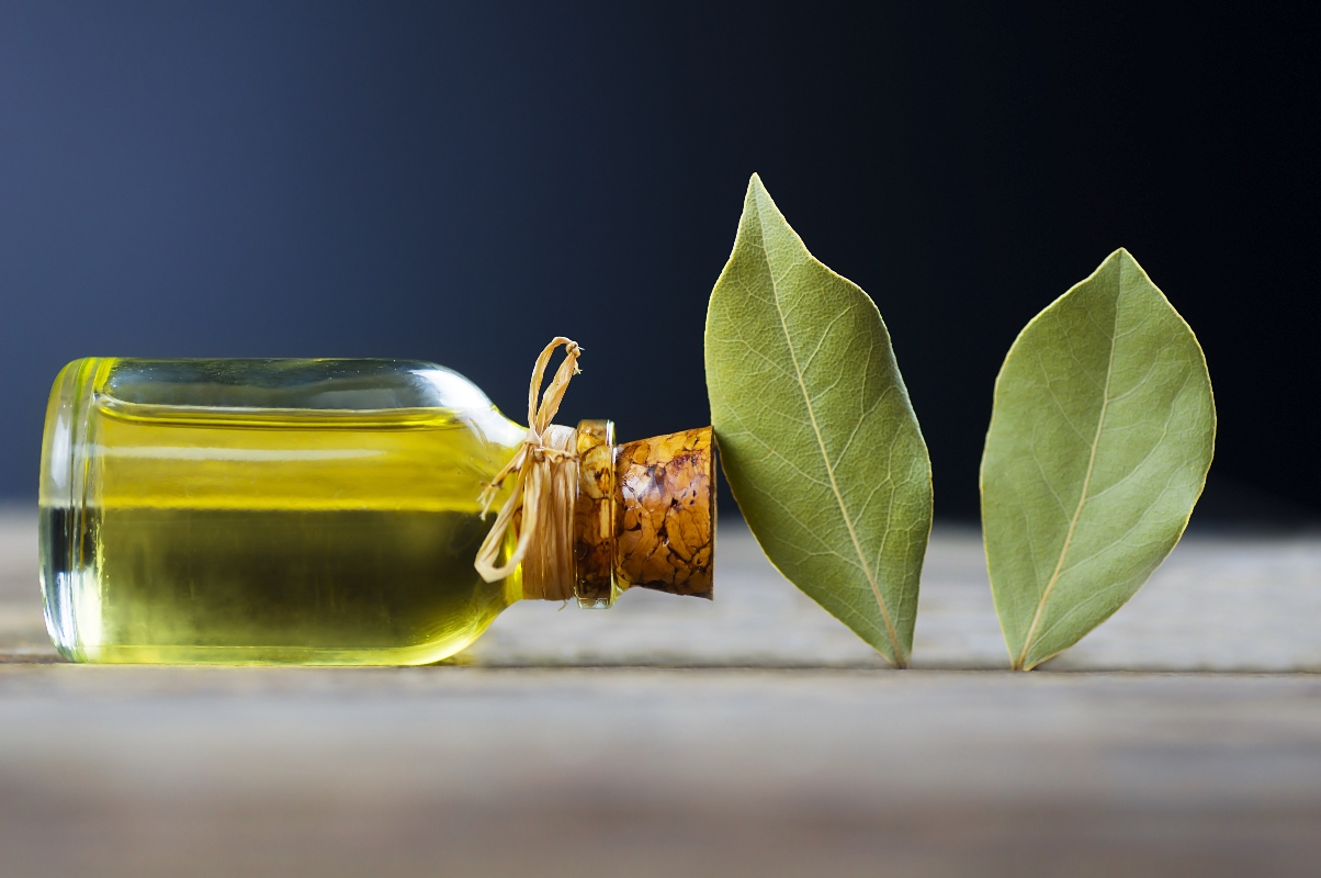 laurel: que es, propiedades, beneficios para la salud, usos en belleza y cocina