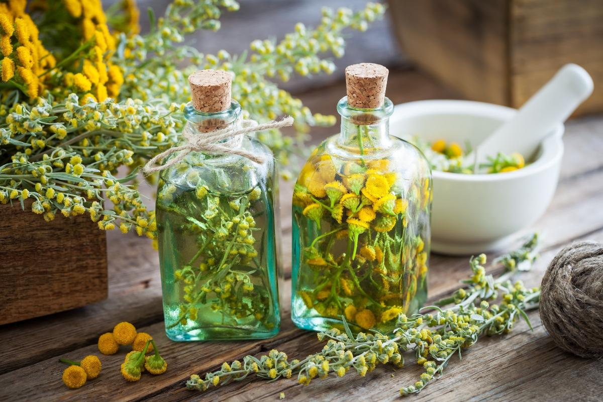 Absinthe: qué es, beneficios, historia, botánica, contraindicaciones