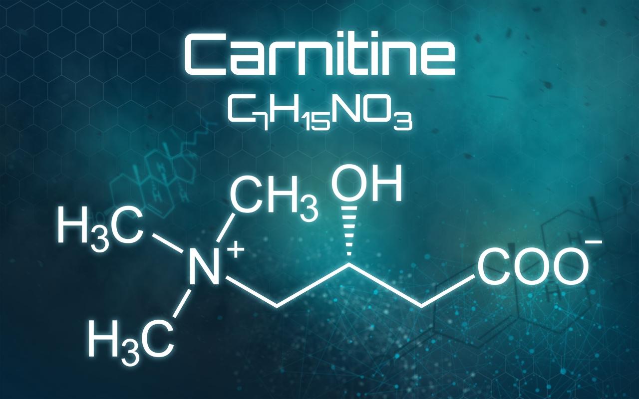 carnitina: fisiología