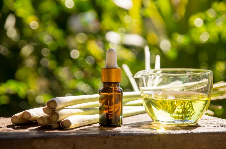 Limoncillo: que es, propiedades terapéuticas, cultivo de la planta antimosquitos y recetas