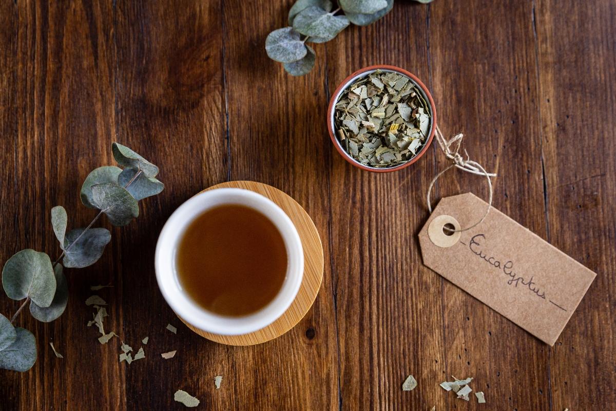 eucalipto: usos en la medicina herbal
