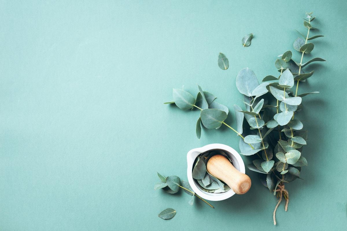 eucalipto: usos en belleza