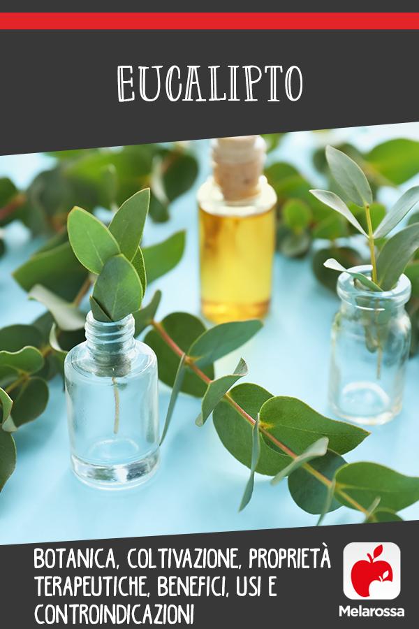 eucalipto: que es, cultivo, propiedades, beneficios y usos