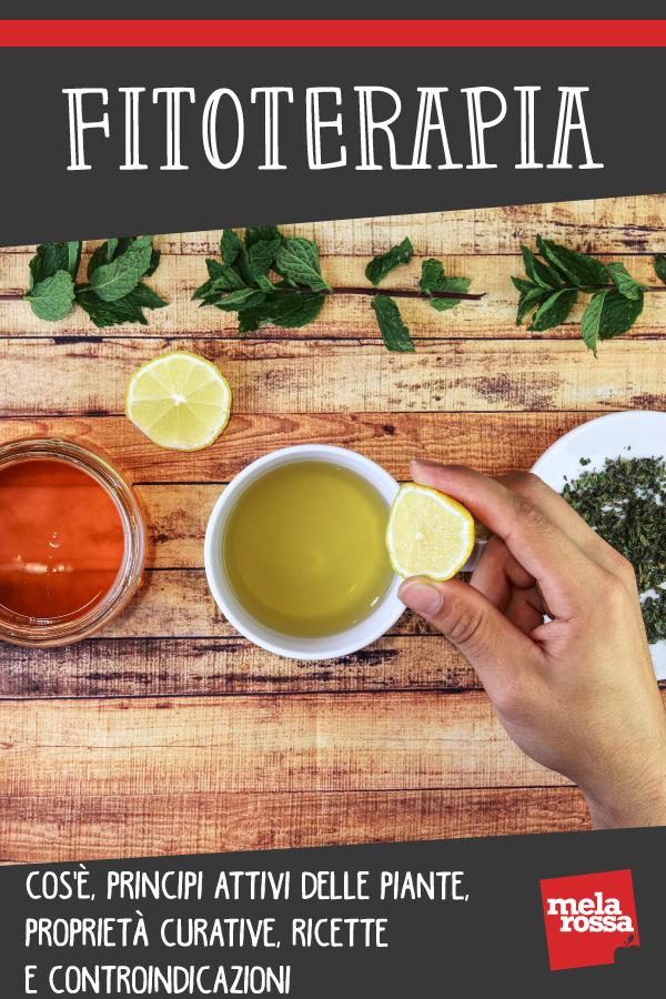 Fitoterapia: que es, activos vegetales, beneficios y recetas