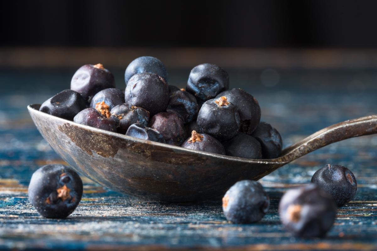 enebro: que es, botánica, beneficios, valores nutricionales y recetas