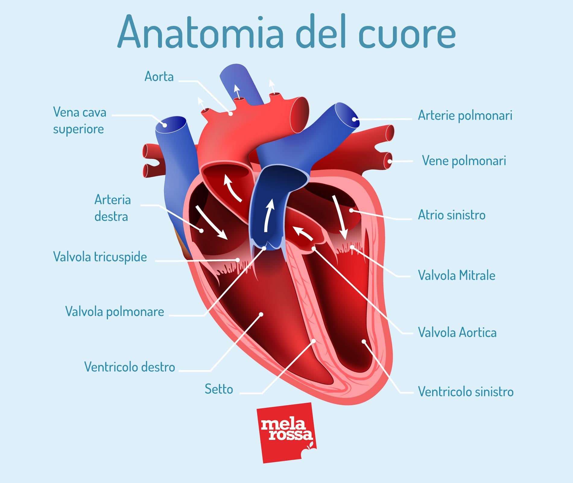 hipertensión y corazón