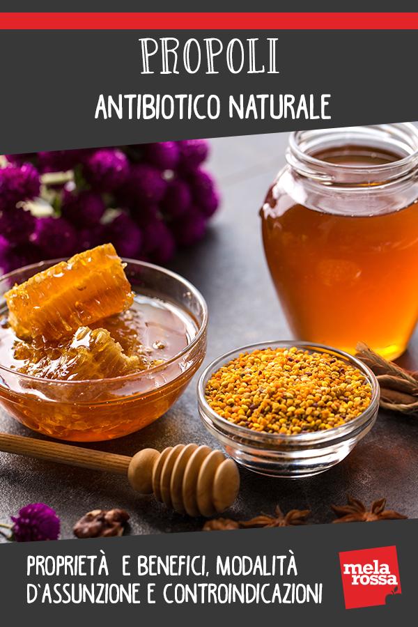 Propóleo: antibiótico natural